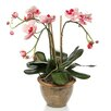 Nearly Natural Triple Mini Phalaenopsis Orchid Flower in Pink