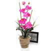 Nearly Natural Phalaenopsis Silk Orchid with Ceramic Pot
