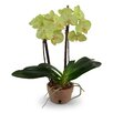 New Growth Designs Double Faux Phalaenopsis Orchid
