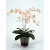 Distinctive Designs Waterlook® Phaleanopsis Orchids with Orchid Foliage and Fern in Glass Pot