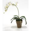 Distinctive Designs Silk SIngle Orchid Plant in Tuscan French Pot (Set of 2)