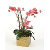 Distinctive Designs Silk Fuchsia Orchid with Bonsai Limbs and Dragonwood in Golden Tortoise Box