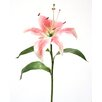 Distinctive Designs DIY Flower Single Hawaiian Lily (Set of 12)