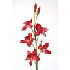 Distinctive Designs DIY Flower Cymbidium Orchid (Set of 12)