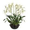 "Tori Home 32"" Brassia Orchid Plant with Terra Cotta Bowl"