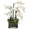 Winward Designs Phalaenopsis in Square Glass