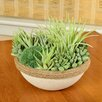 Picnic At Ascot Artificial Succulent Garden in Faux Stone Planter