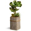 National Tree Co. Succulent Plant in Pot
