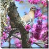 West of the Wind Outdoor Canvas Art Dove in Redbud Photographic Print on Wrapped Canvas