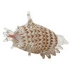 Woodland Imports Sea Shell Figurine