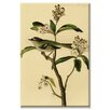 Buyenlarge 'Cuvier's Kinglet' Graphic Art on Wrapped Canvas