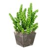 Creative Displays, Inc. Monkey Tail Succulents Recycled Planter
