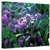 ArtWall 'Poppies in Monet's Garden' by Kathy Yates Photographic Print on Wrapped Canvas