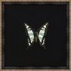 Melissa Van Hise Butterflies IV Framed Art in Black