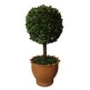 "Laura Ashley Home 29"" Preserved Boxwood Ball in Clay Pot"
