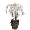 Laura Ashley Home Orchid Arrangement in Fiberstone Pot