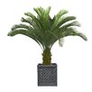 Laura Ashley Home Cycas Palm Tree in Planter