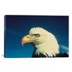 iCanvas Bald Eagle Photographic Print on Canvas