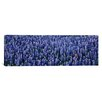 iCanvas Panoramic Bluebonnet Flowers in a Field, Hill County, Texas Photographic Print on Canvas