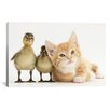 iCanvas 'Babies' from Interlitho Designs Photographic Print on Canvas