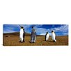 iCanvas Panoramic Four King Penguins, Falkland Islands Photographic Print on Canvas