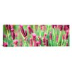 iCanvas Panoramic High Angle View of Italian Lavender Photographic Print on Canvas