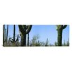 iCanvas Panoramic Saguaro National Park, Tucson, Arizona Photographic Print on Canvas