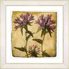 Studio Works Modern Vintage Botanical No. 16A  by Zhee Singer Framed Giclee Print Fine Wall Art