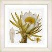 Studio Works Modern Vintage Botanical No. 07W by Zhee Singer Framed Giclee Print Fine Wall Art
