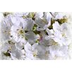 Marmont Hill Apricot Blossoms by Aryai Painting Print on Wrapped Canvas
