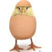 Advanced Graphics Hatching Chick Cardboard Standup