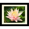 Graffitee Studios Floral/Nature Purity Lotus Flower Framed Photographic Print