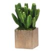 Dalmarko Designs Cactus in Planter