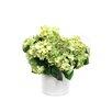 Dalmarko Designs Hydrangeas in Planter