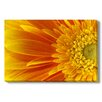 Gallery Direct Gerbera Flower Photographic Print Wrapped on Canvas