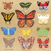 Wheatpaste Art Collective Butterfly Study by Small Adventure Painting Print on Wrapped Canvas