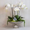 TC Floral Company Orchid and Celestite in Urn