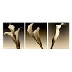 Ready2hangart '3 Lillies' by Bruce Bain 3 Piece Photographic Printt on Wrapped Canvas Set