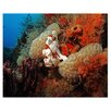 Ready2hangart 'Underwater' by Christopher Doherty Framed Photographic Printt