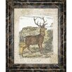 Classy Art Wholesalers Woodland Stag 1 Framed Graphic Art