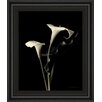 Classy Art Wholesalers Botanical Elegance Calla III by Amy Melious Framed Photographic Print