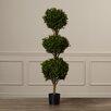 Charlton Home Beauchamp Triple Ball Shaped Boxwood Topiary in Pot