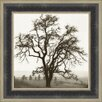 Midwest Art and Frame Country Oak Tree by Alan Blaustein Framed Photographic Print