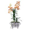 Gold Eagle USA Vanda Orchid with Foliage Potted in Pot