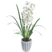 Gold Eagle USA Cymbidium with Grass in a Braided Pot