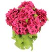 GSC, Inc 7 Stems Artificial Full Blooming Stain Hydrangea