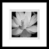 "Star Creations ""Lotus II"" by Glenn Taylor Framed Painting Print"