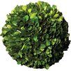 Napa Home and Garden Preserved Greens Ball Wreath (Set of 4)