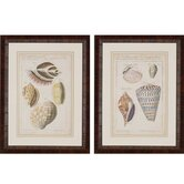 Shell Study by Martini 2 Piece Framed Painting Print Set (Set of 2)