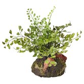 Maidenhair Fern Plant Drop-In